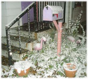 snowflamingos.jpg