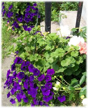 stopandsmelltheflowers.jpg