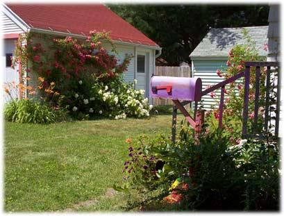 backyard07.jpg