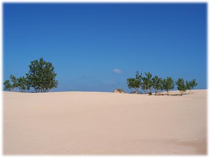duneswithtrees.jpg