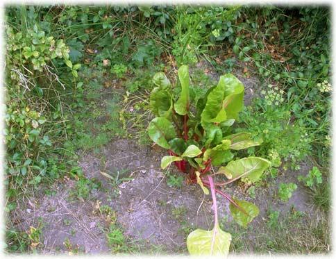 gardenbeforepicking.jpg