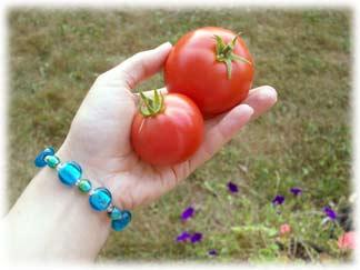 tomatoesinhand.jpg