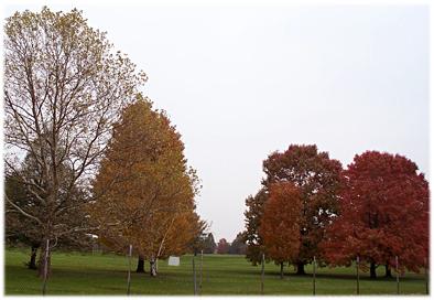 autumnmsufarm.jpg