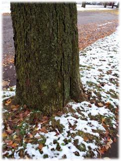 thanksgivingtree12.jpg