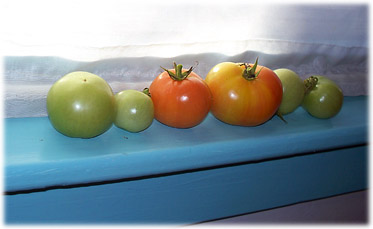 tomatoesinwinter.jpg