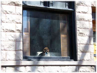 chicagodoginwindow.jpg