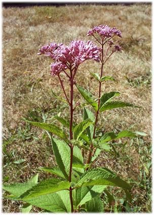 purpleflower16.jpg