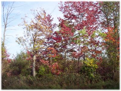 fallcolor1.jpg