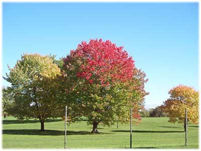 autumnmsugolfcourse.jpg