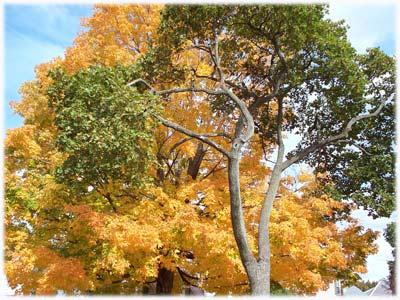 autumnrileystreet400.jpg