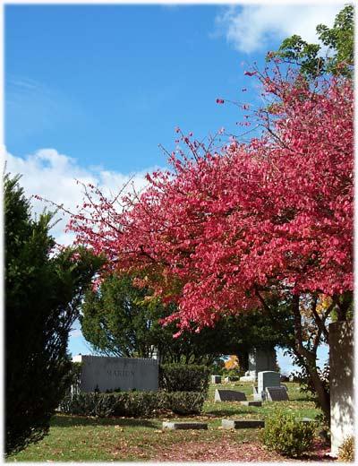 cemetery124sm.jpg