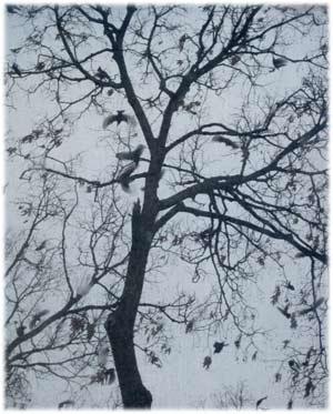 birds25.jpg