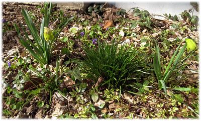 firstflowers09.jpg