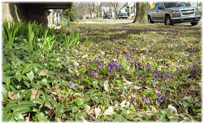 violets400.jpg