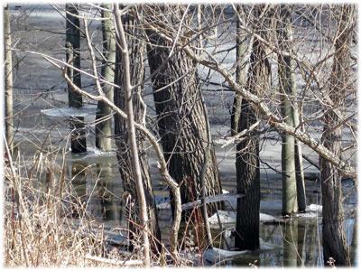 woods6.jpg