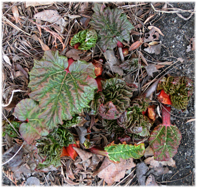 momrhubarb09.jpg