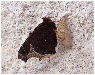 butterflynew400.jpg