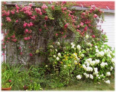 gardenhandsfree400.jpg