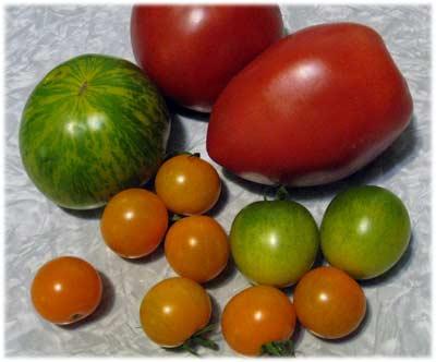 tomatoesfromrita