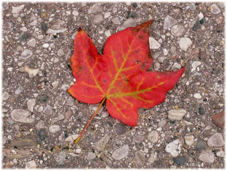 autumnleafoldtown