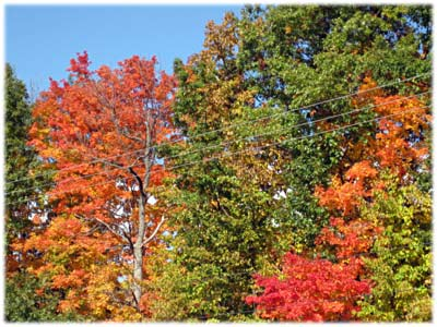 autumnmsubygasstation