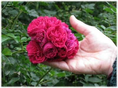 rosesturnerdodgeoct0609-400