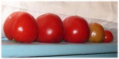 tomatoesripened
