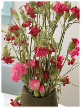 carnationsduring