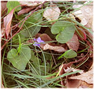 october violet